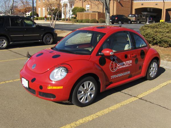 Beetle with Eyelashes